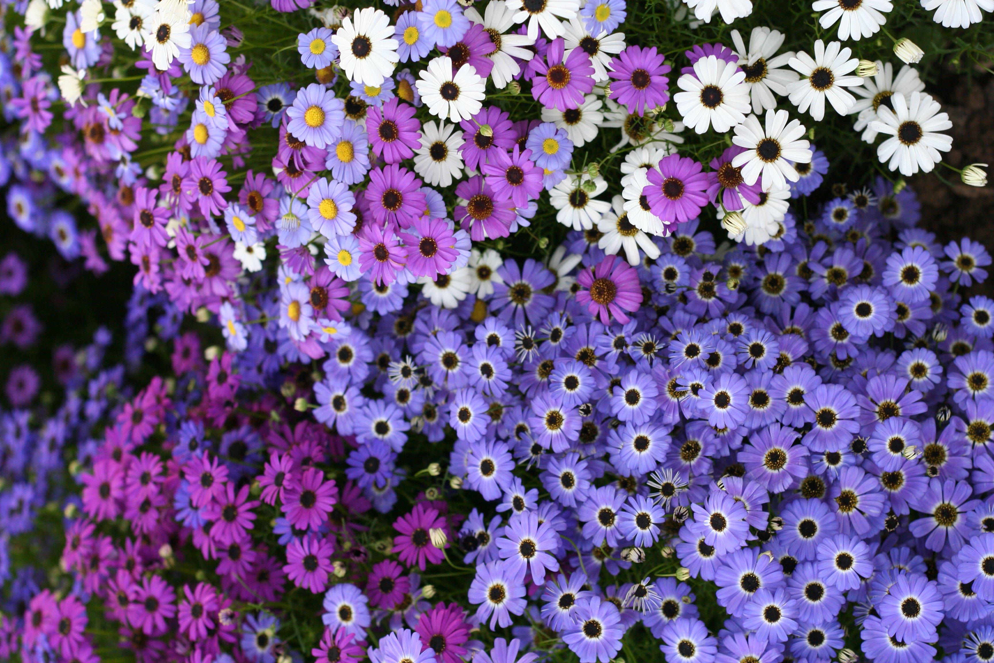 Фото всех уличных цветов