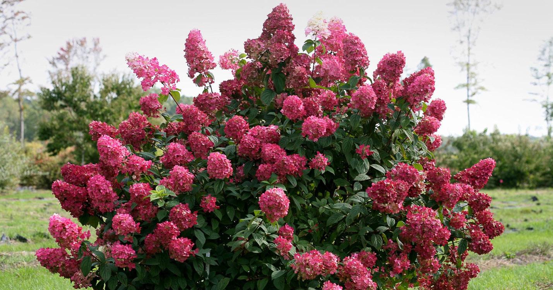 мамы декоративные садовые кустарники фото и названия это корабли, которые