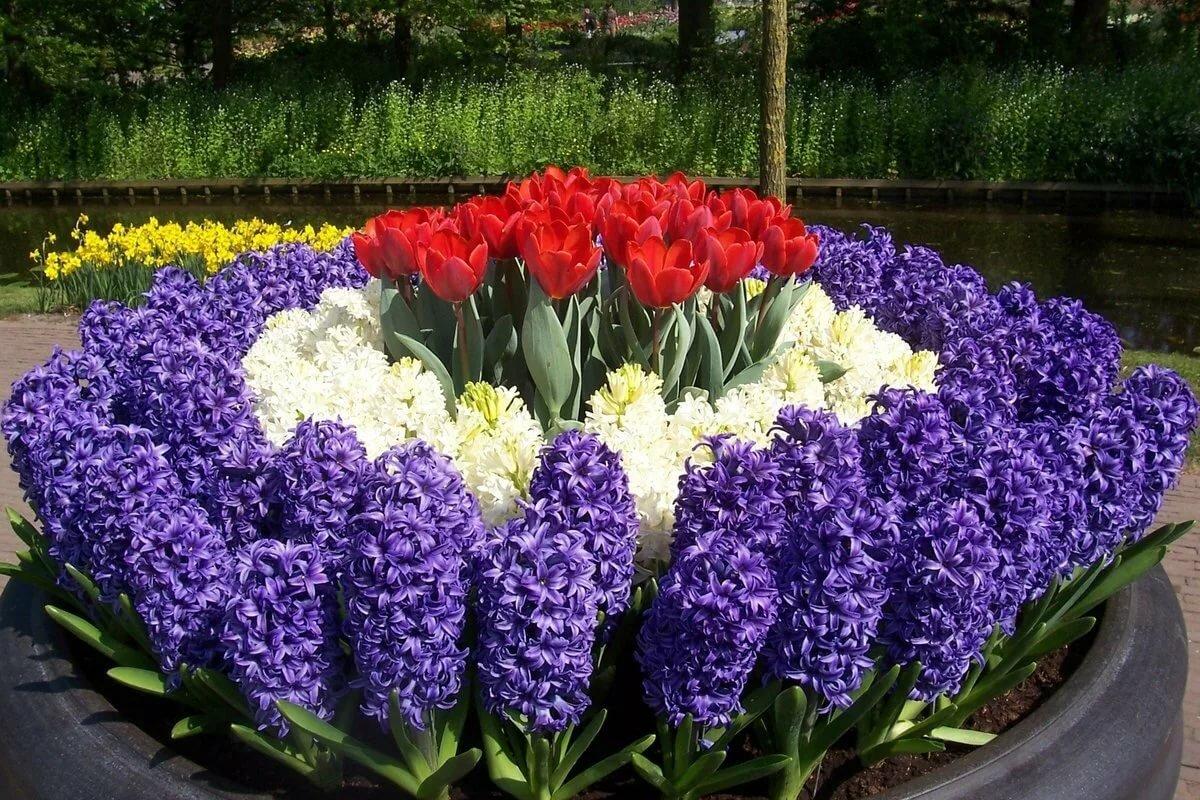 Цветы для друга картинки упражнений комплексе