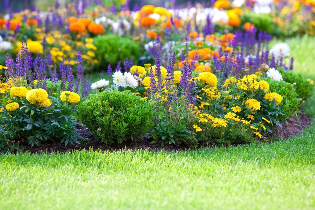 Неприхотливые цветы для дачи (63 фото): долгоцветущие однолетники для сада для ленивых и самые неприхотливые многолетние растения