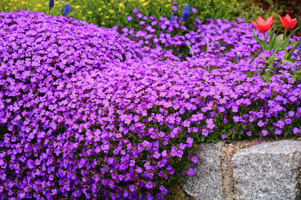 Уход за азалией после цветения фото