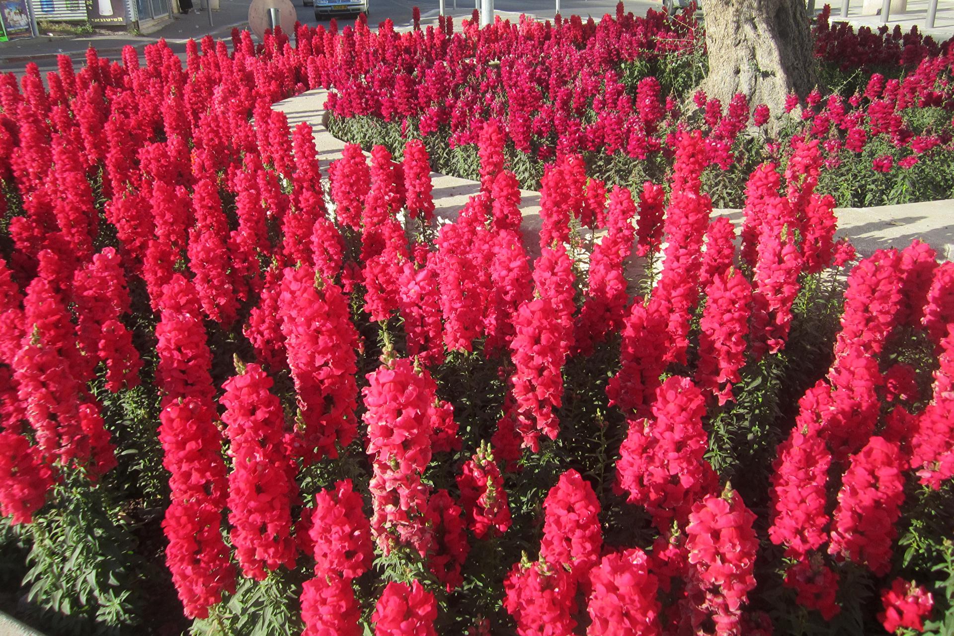 Красивые цветы для клумбы — как выбрать и посадить своими руками? 115 фото лучших сочетаний для клумб