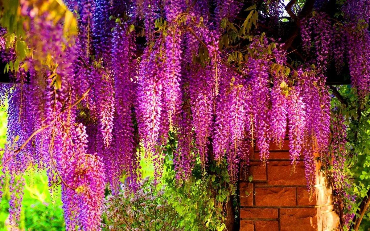 Вьющееся растение с желтыми цветами