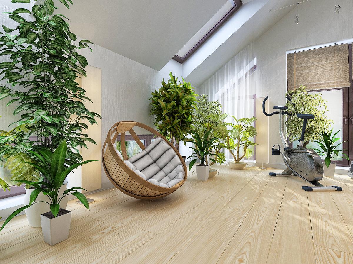 Домашние растения - самые красивые и популярные (50 фото)