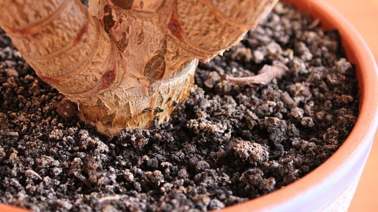 Почему в земле комнатных растений появляется плесень