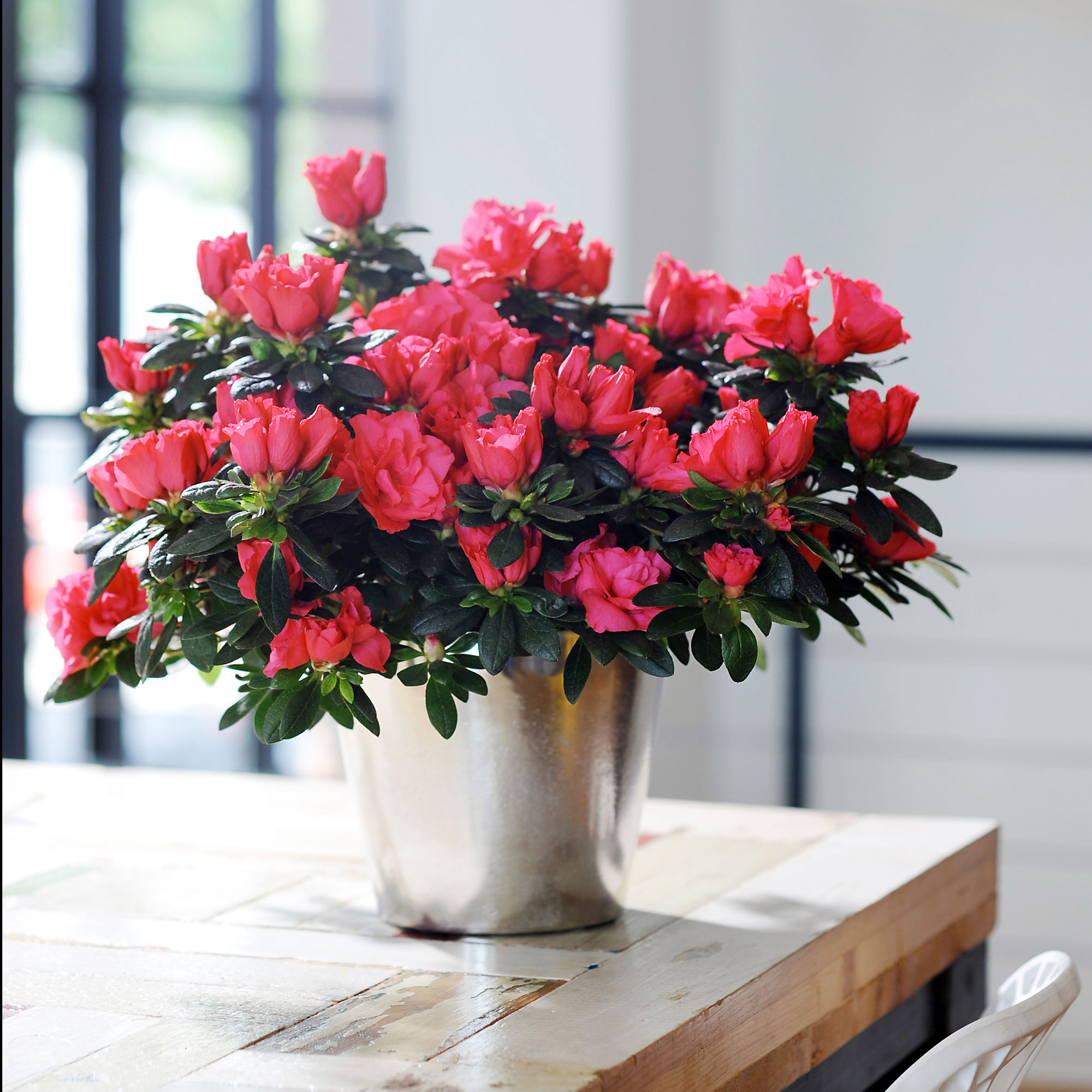 комнатные цветы которые красиво цветут картинки над рекой