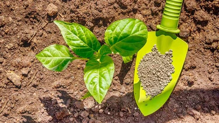 Фосфорные удобрения их значение и применение на дачном участке