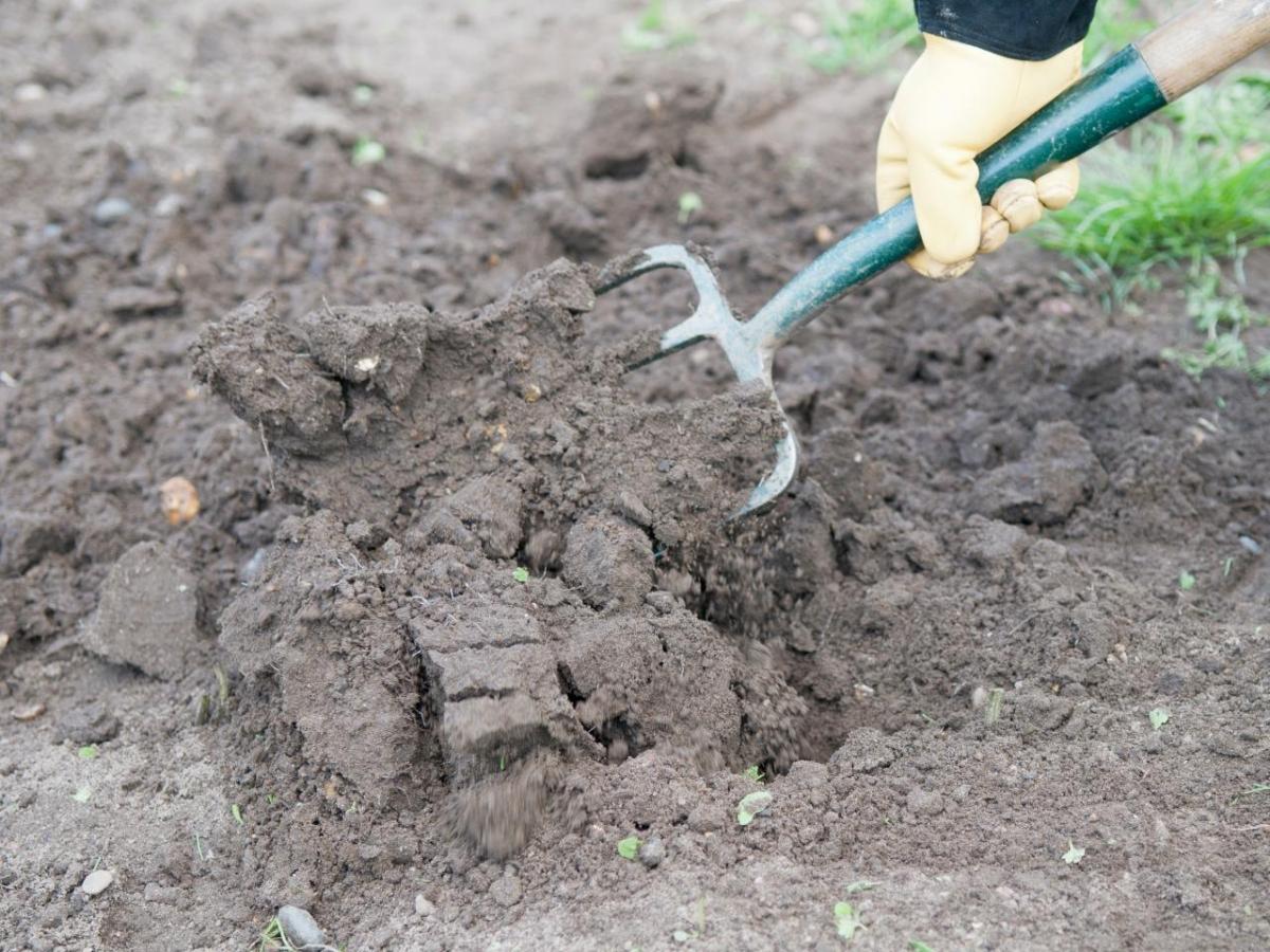 фотографии дадут какие растения любят песчаную почву с фото чтобы буквы