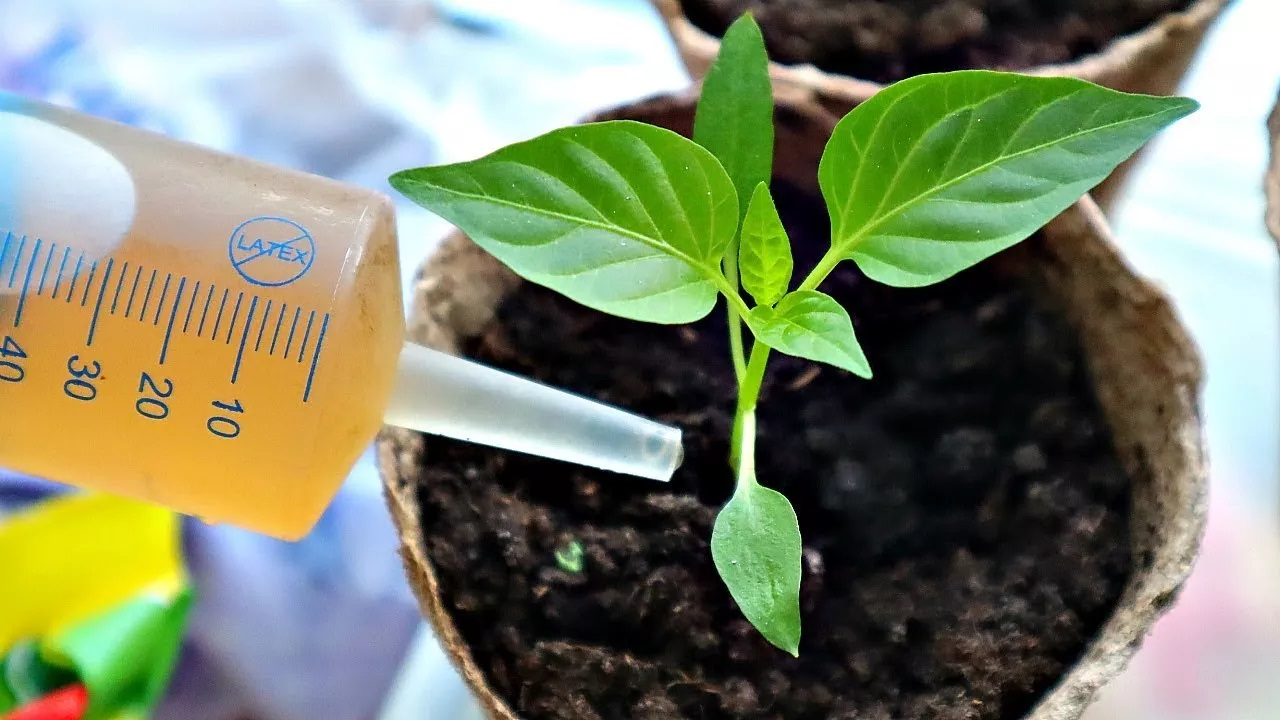 чем полить алоэ чтобы рос хорошо