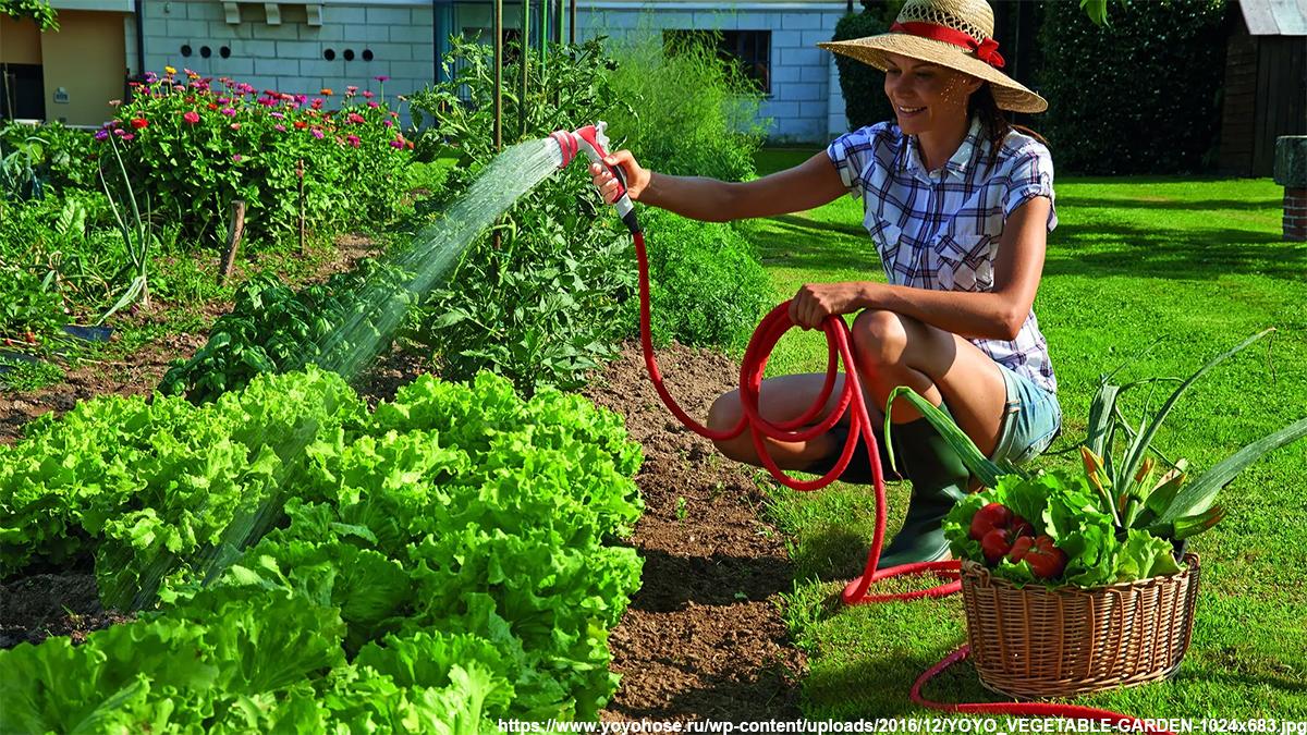 поливать огород днем