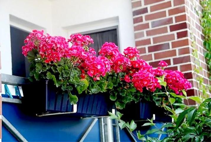 Мой балкон - цветущий оазис полезные статьи на блоге беккер..