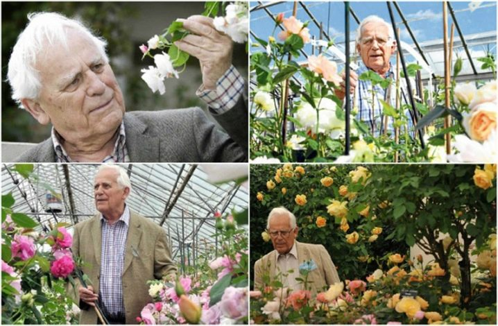 Выращивание, уход за розами, сорта и букеты из роз