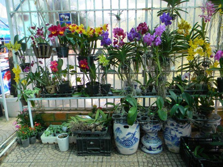 Сорта орхидей для дома