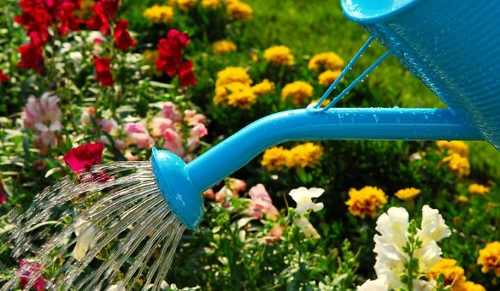 How To Choose a Watering Can Like a Pro 9