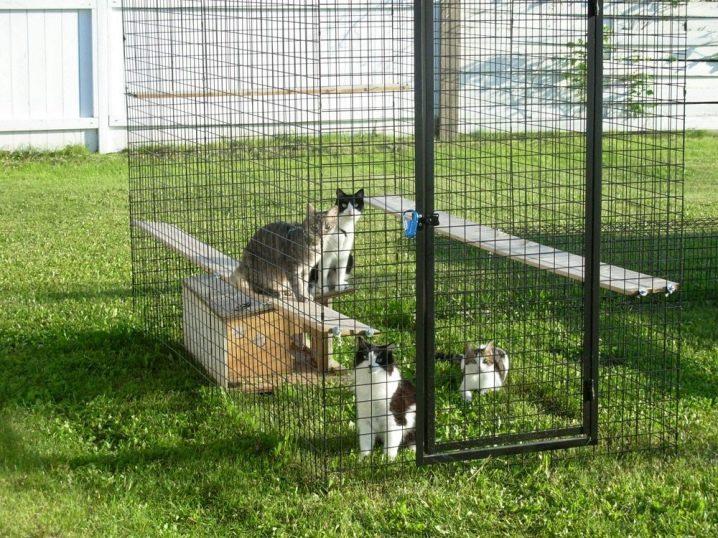 конечно, вольеры для кошек картинки уверяют, что задорнов