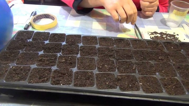 Как вырастить гибискус из семени thumbnail