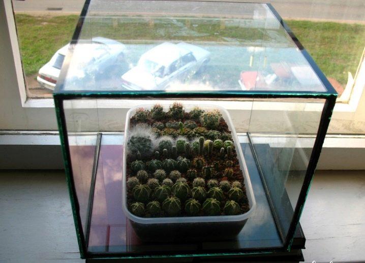 Посадка суккулентов из семян