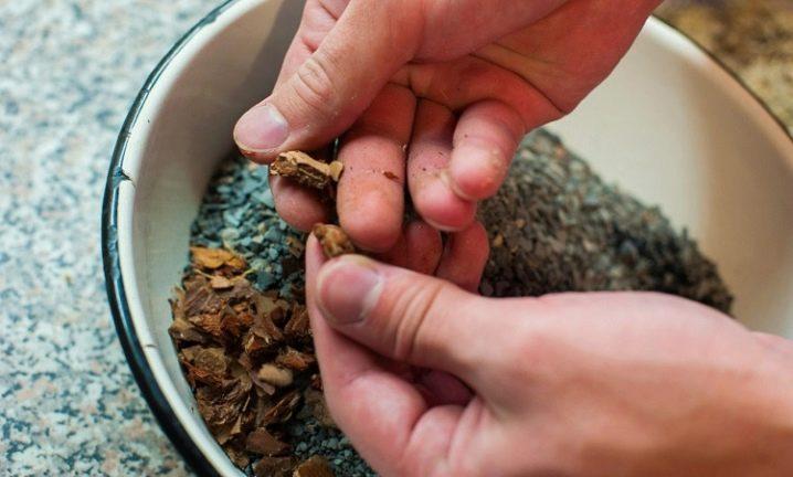 Как выращивать литопсы из семян в домашних условиях?