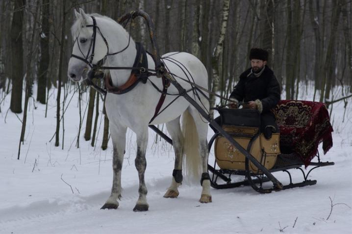 Как правильно запрягать лошадь?