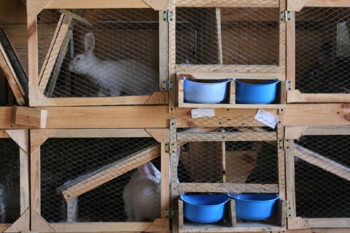 музыкальный кролиководство в домашних условиях клетки фото истукан