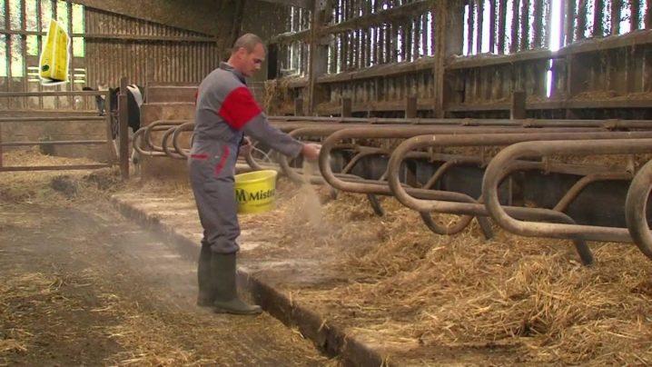 Красногорбатовская - одна из лучших молочных пород коров и ее особенности, характеристики