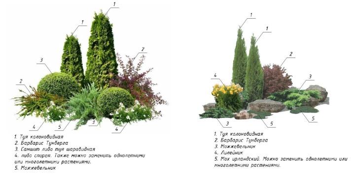Декоративные кустарники для дачи: 9 самых популярных кустарников