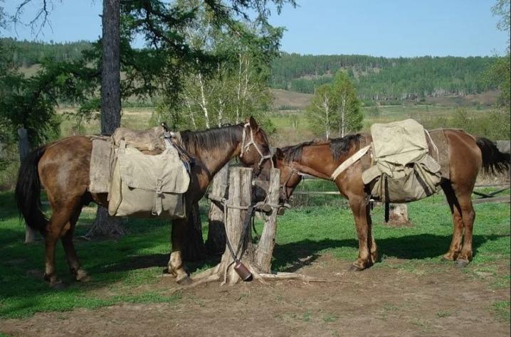 Универсальные породы лошадей - Фермеры России
