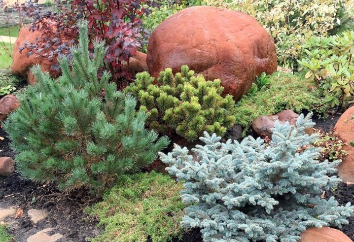 Низкорослые ели для сада фото и названия