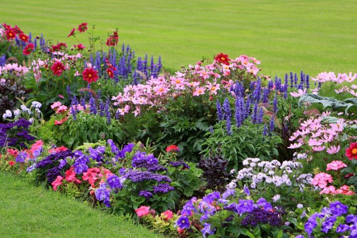 Многолетники для дачи цветущие все лето фото