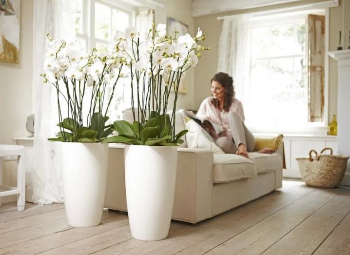 Как разместить цветы в квартире