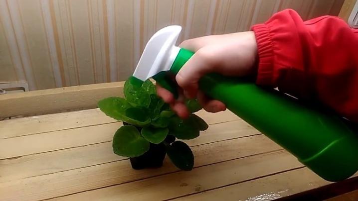Фитоверм: инструкция по применению для растений, отзывы