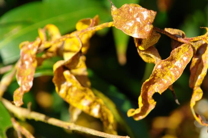 Царская корона посадка и уход в открытом грунте осенью