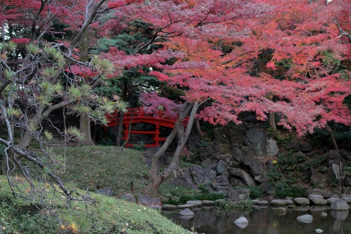 Laceleaf Japanese Maple: Full Care & Propagation Guide 31