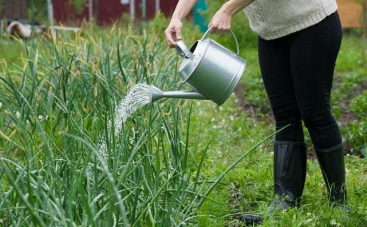 можно ли поливать лук днем
