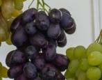 Виноград Красава