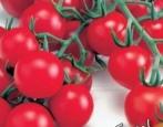Томат Красная гроздь