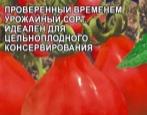 Томат Лампочка