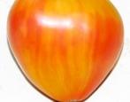 Томат Сердце абрикосовой зебры