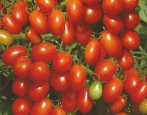 Томат Черри оливка