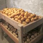 kartofel-hranenie-1-obshchaya-statya.jpg