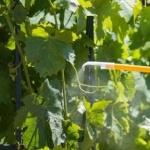 Защита без пестицидов