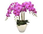Орхидея: разновидности, советы по выбору и выращиванию